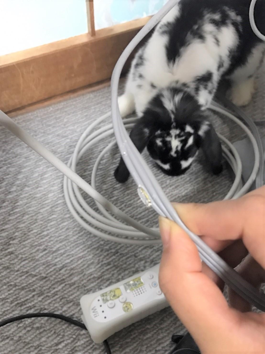 うさぎがコードを噛む